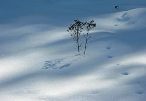 1st Prize Winner In Contest - Snow Photography